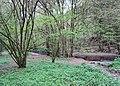 Naturschutzgebiet Eifgenbach.JPG