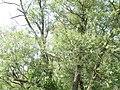Naturschutzgebiet Heuckenlock 21.05.2014 42.JPG