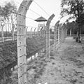 Nazi Persecution B11677.jpg
