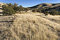 Near Chatfield Canyon - Flickr - aspidoscelis (2).jpg