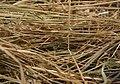 Needle in haystack4.jpg