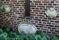 Neer - Leudalweg 1640GM108 Plaquettes.jpg