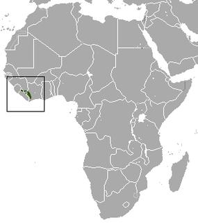 Nimba shrew Species of mammal