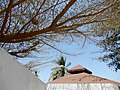 Ninho, Bolama, Guiné-Bissau – 2018-03-03 – DSCN1304.jpg