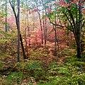 November in Georgia.jpg