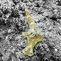 Nudibranch (207959627).jpeg