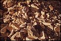 OIL SHALE. IT IS THE KEROGEN IN THIS ROCK WHICH WHEN HEATED TO 900 F., YIELDS OIL - NARA - 552547.jpg