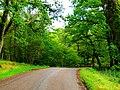 Oaks - panoramio (1).jpg