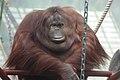 Oji zoo, Kobe, Japan (5388276465).jpg