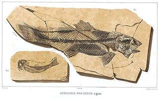 <i>Ophiopsiella</i> genus of fishes