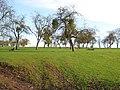 Orchard near Carswalls Manor - geograph.org.uk - 680318.jpg