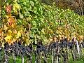 Osterfingen 13.10.2008 13-19-00.jpg