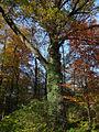 Ostromecko park 31 10-2013.jpg
