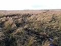 Otterburn Ranges - geograph.org.uk - 1088671.jpg