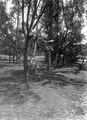 Oxskallar uppsatta på en gren och en stång till skydd mot andarna från ej långt därifrån belägen begravningsplats - SMVK - 001657.tif