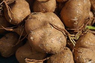 Pachyrhizus erosus - Fresh jícama for sale at a farmers' market
