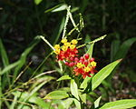Palenque - Jungle - Fleur.JPG
