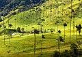 Palma de Cera, Colombia (40487072844).jpg