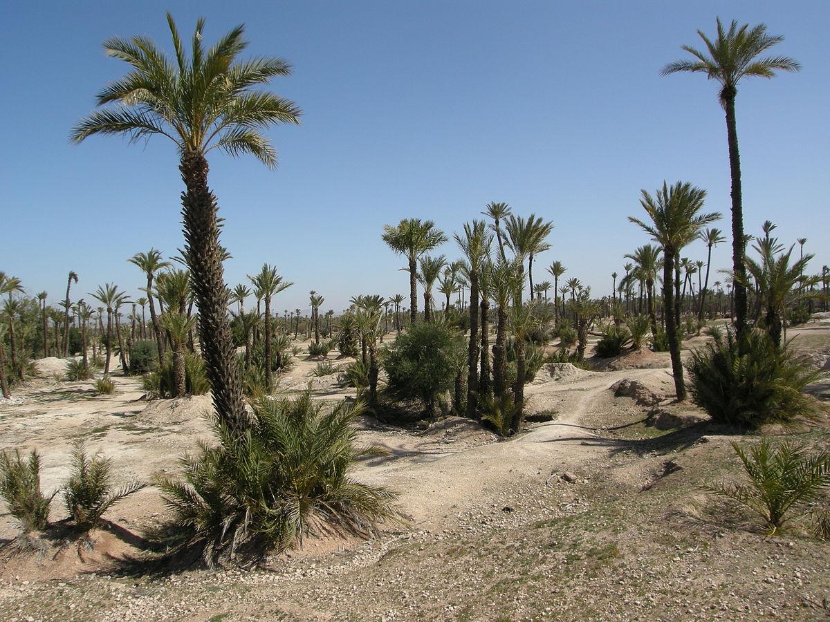 palmeraie de marrakech � wikip233dia