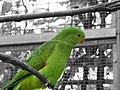 Papagei - panoramio.jpg