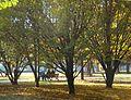 Parco d'autunno.JPG