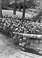 Park met narcissen, Bestanddeelnr 190-1377.jpg
