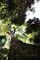Parque Estadual de Vassununga.jpg