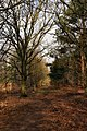 Peddars Way - geograph.org.uk - 337505.jpg