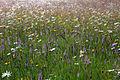 Pentwyn Farm Meadow, Penallt.jpg