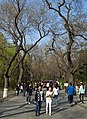 People walking in Beihai Park, Beijing.jpg
