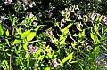 Pflanzen im Wald - panoramio.jpg