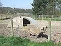 Pig^ Near the M54, Hilton Park, Staffordshire - geograph.org.uk - 391852.jpg