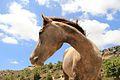 PikiWiki Israel 38314 Horsey on vacation.jpg