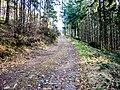 Piste forestière montant vers le Trou du Loup.jpg