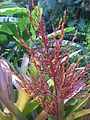 Plant 4 Cairns.jpg