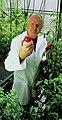 Plant physiologist admiring a tomato.jpg