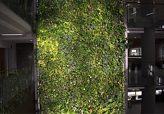 Green wall - An indoor green wall at the University of Ottawa