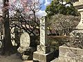Plum trees and stela on sando of Dazaifu Temman Shrine.jpg