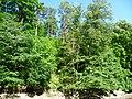 Pod Holoubkem-alibaba - panoramio.jpg