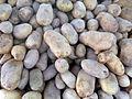 Pommes de terre-Aqaba.jpg