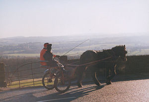 Trap (carriage) - Pony and trap in northern England.