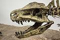 Postosuchus skull.jpg