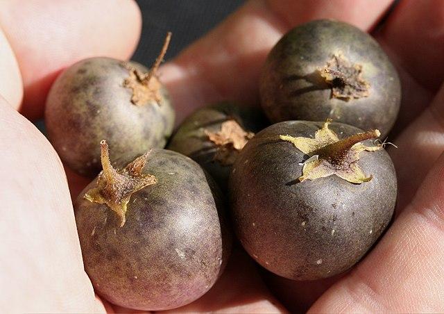 Ягоды картофеля