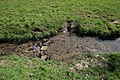 Prairie de Jaumeron à Gif-sur-Yvette le 1er avril 2015 - 28.jpg