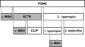 Proopiomelanocortin hydrolysis (est).png