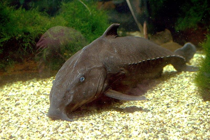 Unique Freshwater Species of Fish for Your Aquarium