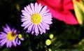 Purple flower power.jpg