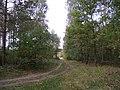 Puszcza Bydgoska - panoramio.jpg