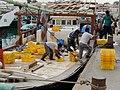 Qatar, Al Khor (10), harbour, offloading fish.JPG