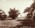 Queensland State Archives 5145 Palms Botanical Gardens Rockhampton c 1897.png